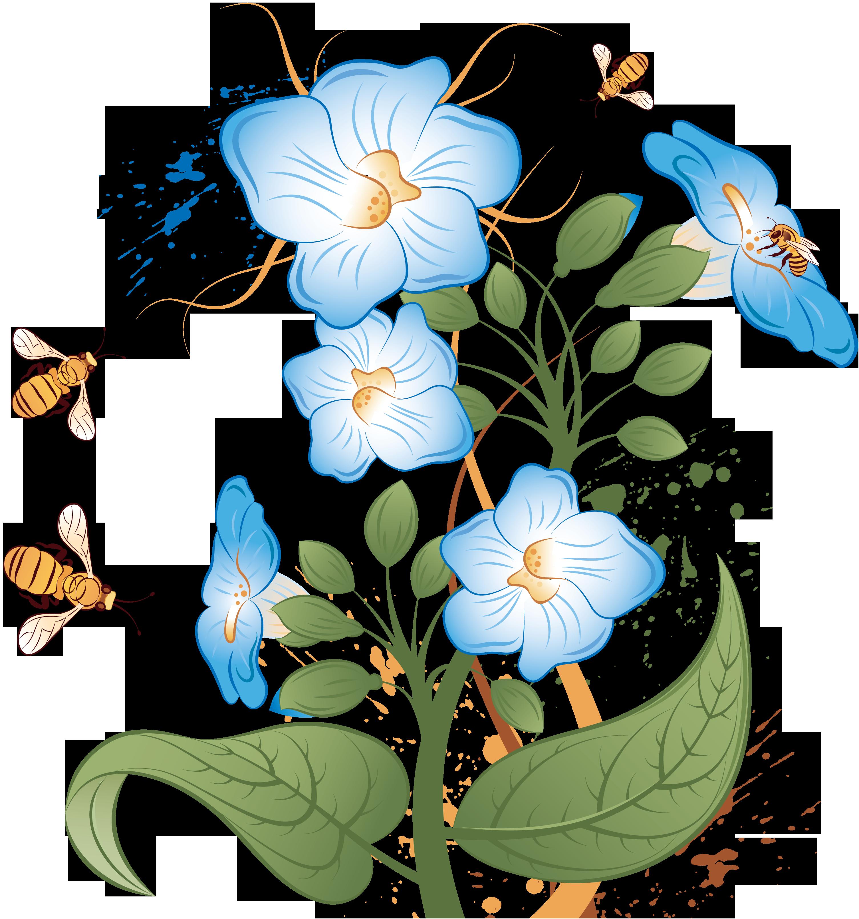 Цветок вьюнок комнатный